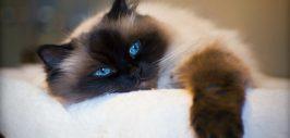 pisici Mangalia