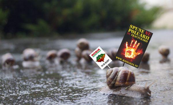 mangalia spune nu