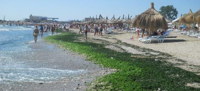 Alge-pe-plaja